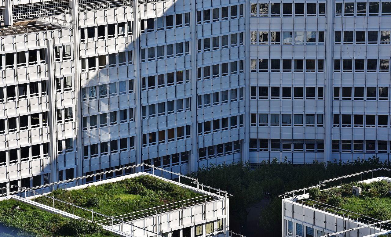 Klimaschutz, Biodiversität und Wohlbefinden verbinden - Wir brauchen begrünte Gebäude in Mainz!